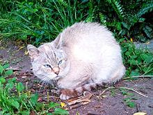 散歩中に出会ったヌコ様の画像(猫の日に関連した画像)