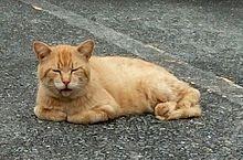 駐車場の茶トラ猫さん🐈️の画像(猫の日に関連した画像)