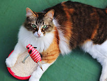 猫の日🐈️三毛猫さんの画像(毛に関連した画像)
