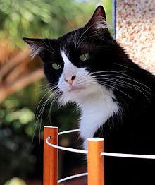 猫の日🐈️タキシード猫さんの画像(猫の日に関連した画像)