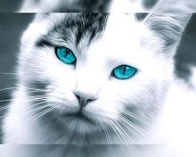 猫の日🐈️サバ白ブチさんの画像(猫の日に関連した画像)
