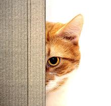 猫の日🐈️覗く茶白さんの画像(猫の日に関連した画像)