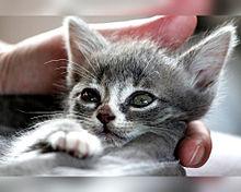猫の日🐈️ヨコミミ様の画像(猫の日に関連した画像)