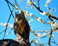 春の花とヌコ様 プリ画像
