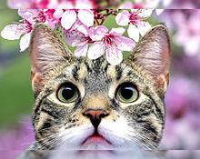 桃の花とキジシロちゃん プリ画像