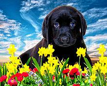 春の花とワンコ プリ画像