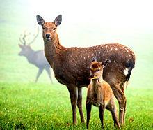 母の日🦌鹿のお母さんの画像(鹿に関連した画像)