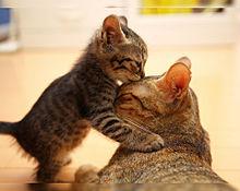 母の日🐈️ママ大好き😽😻の画像(愛情に関連した画像)