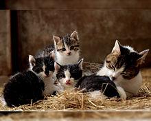 母の日🐈️猫のお母さんの画像(癒しに関連した画像)