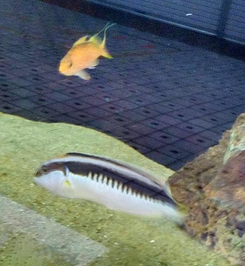 お魚さんたち🐟️🐠  (リアル🤳)の画像(プリ画像)
