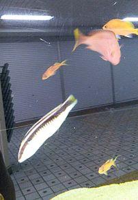 お魚さんたち🐟️🐠  (リアル🤳) プリ画像