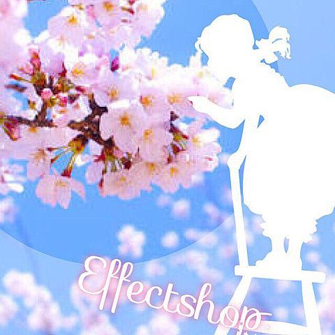 桜ですよ!近くの公園まだ咲いてる(^ω^)の画像(プリ画像)