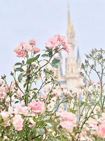 #disney#ディズニーランド#シンデレラ城の画像(ディズニーランドに関連した画像)