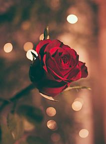 Flower 🌹 プリ画像