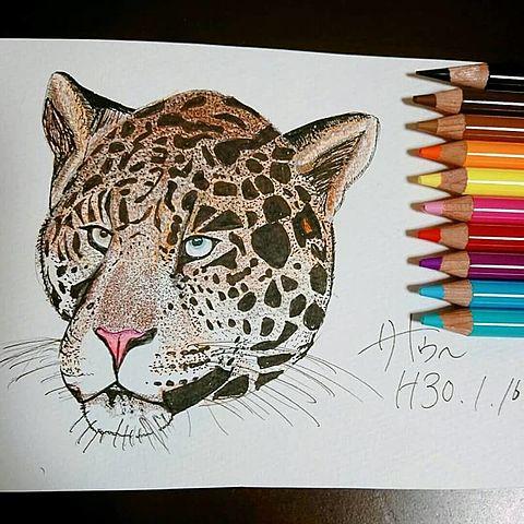ジャガー一発描きの画像(プリ画像)