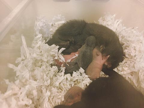 カラージャービル  の赤ちゃん産まれました😍8/30💗の画像(プリ画像)