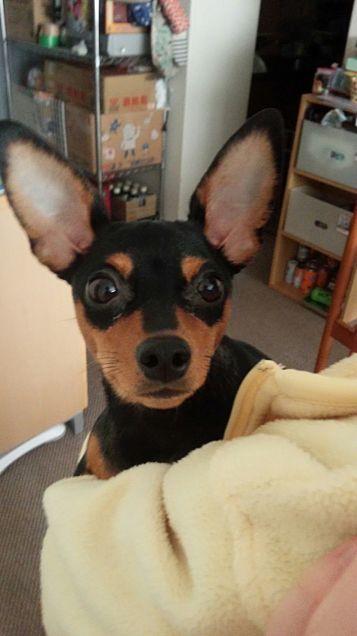 うちの犬♡の画像(プリ画像)