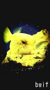 fugu プリ画像