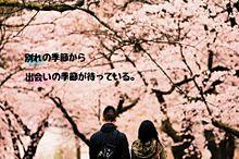 祝☆恋するバム80枚目(^^)の画像(片思い/片想い/片想いポエムに関連した画像)