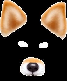 snowの犬 プリ画像