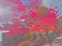 秋 プリ画像