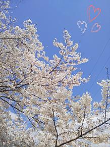 入学式だ〜‼の画像(入学式に関連した画像)