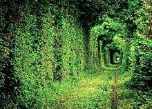 ウクライナ 愛のトンネル 写真右下のハートを押してねの画像(ウクライナに関連した画像)