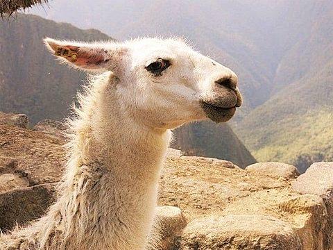ペルー 世界遺産 マチュピチュ 写真右下のハートを押してねの画像 プリ画像