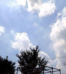 木とジャングルジムと空の画像(プリ画像)