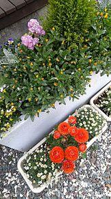 花 プランター 加工なしの画像(プランターに関連した画像)