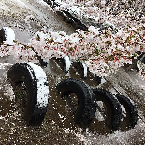 桜の木の下です!!!!の画像(プリ画像)