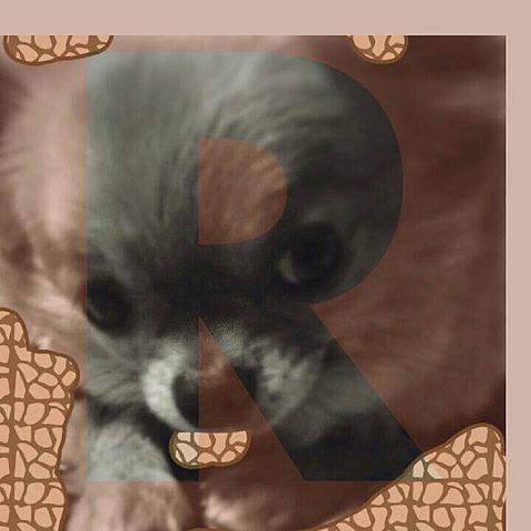 mydogの画像 プリ画像