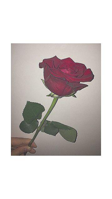 薔薇🌹の画像(プリ画像)