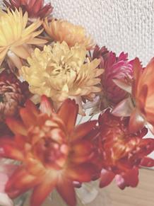 花の画像(オレンジに関連した画像)