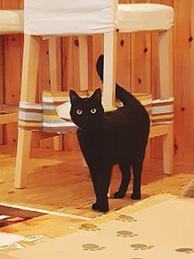 黒猫 プリ画像