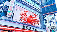 大阪の画像(道頓堀に関連した画像)