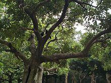代々木公園の画像(からすに関連した画像)