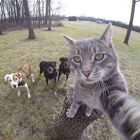 猫の自撮りの画像(プリ画像)