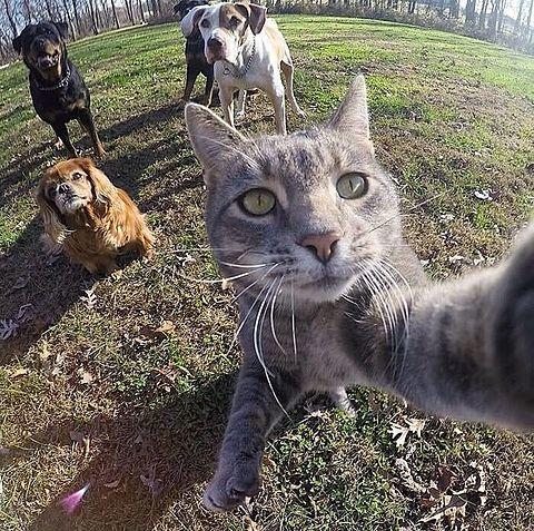 猫の自撮りNo.2の画像(プリ画像)