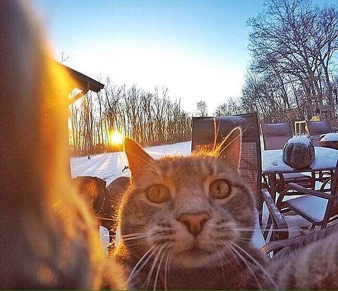猫の自撮りNo.3の画像(プリ画像)