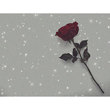 キラ薔薇 プリ画像