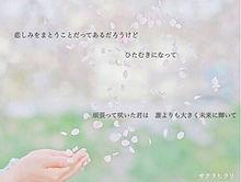 サクラヒラリ 歌詞画の画像(藤ヶ谷太輔/北山宏光/横尾渉に関連した画像)
