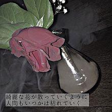 花の画像(#メンヘラに関連した画像)