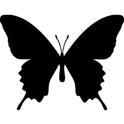 透過済アゲハチョウの画像(プリ画像)