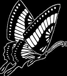 ちょっと透過したアゲハ プリ画像