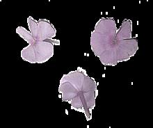華 花   .の画像(ニュアンスに関連した画像)