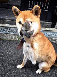 柴犬♡オカメインコの画像(プリ画像)