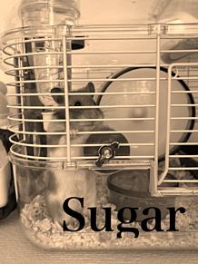 Sugar プリ画像