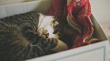 。の画像(猫 おしゃれに関連した画像)