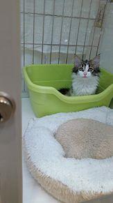 おトイレにちょこんの画像(#ノルウェーに関連した画像)